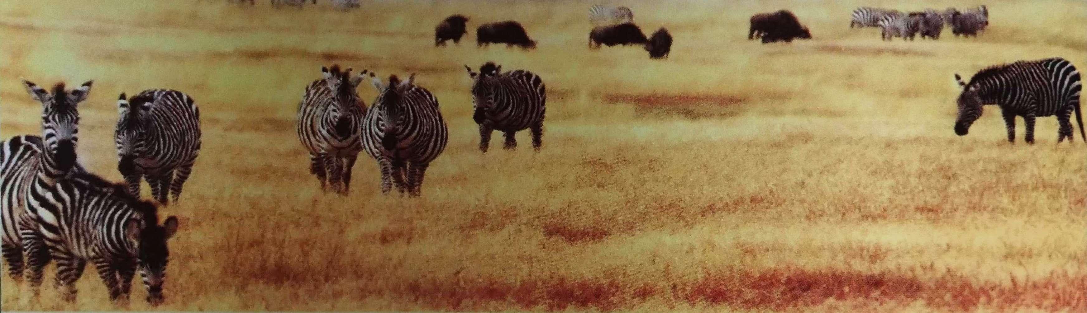 African Safari in Kenya & Tanzania – 2019