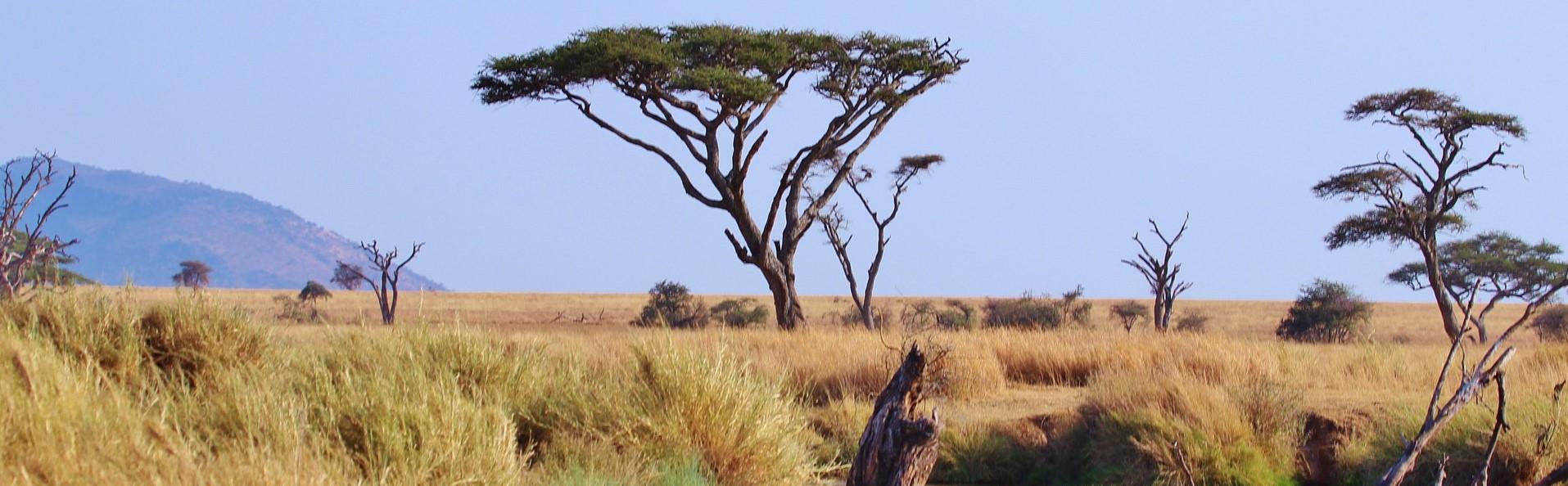 Best of Tanzania & Spice Island (Zanzibar)